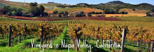 vineyards-napa-valley-california