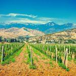 Vineyards Worldwide